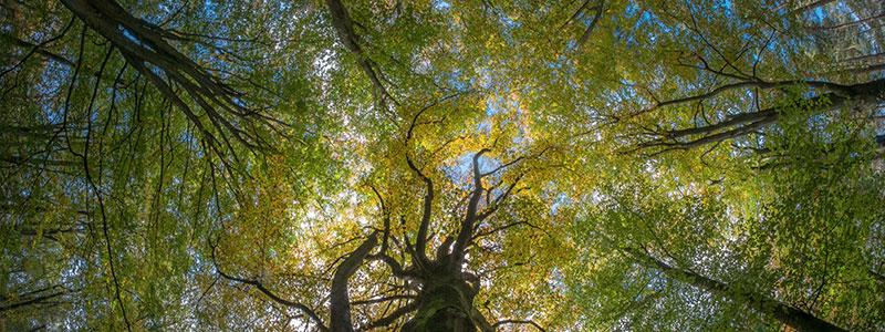 arboriculture-consultants-tree-reports